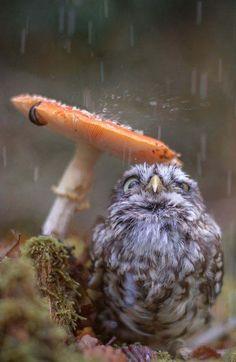 little owl sheltering
