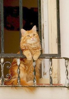 Check it out - Beautiful Cats And Nature ;-D