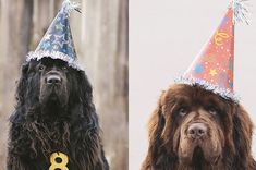 Please sing this song, VERY LOUD, and make our day!  Happy Birthday to us . . . Please don't make a fuss . . .  Just hurry up with our birthday cake . . . And, then don't bother us!