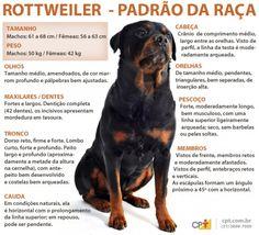 Padrão da raça Rottweiler