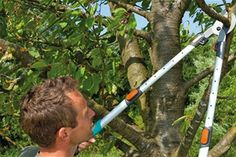 Fruit Trees, Grape Vines, Weed, Outdoor Power Equipment, Garden Ideas, Gardening, Agriculture, Plant, Vineyard Vines