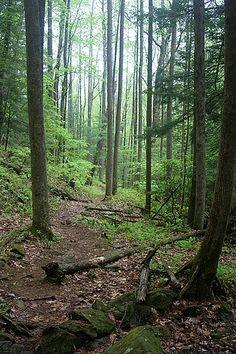 Coosa Trail. Part of GA Death Race. 13 miles.