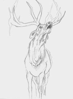 Mel Griffin, elk illustration. graphite drawing on paper. www.melgriffin.com