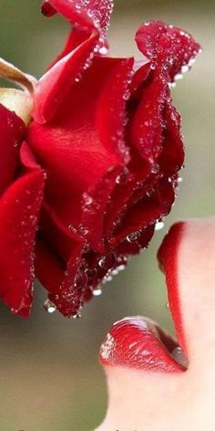A kiss from a rose.....
