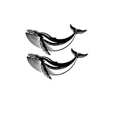 Two small whales temporary tattoo set - all profits to sea shepherd conservation organisation