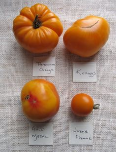 Best Heirloom Tomato Varieties | varieties orange 2012 783x1024 Heirloom Tomato Varieties: 2012 Roundup ...