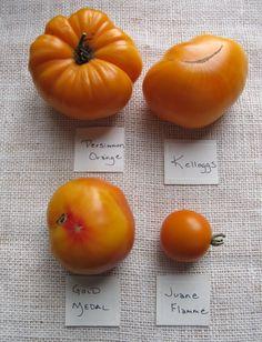 Best Heirloom Tomato Varieties | varieties orange 2012 783x1024 Heirloom Tomato Varieties: 2012 Roundup ...