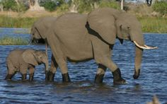 Education Travel | Educational Tour to Botswana | The Best of Botswana: An In-Depth Safari Experience