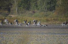 Etang des Landes, une belle escale dans la migration des grues ©M.Tijeiras