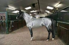 Akhal Teke. Turkish/Russian breed. Very strong horse. Only around 3500 left in the world.