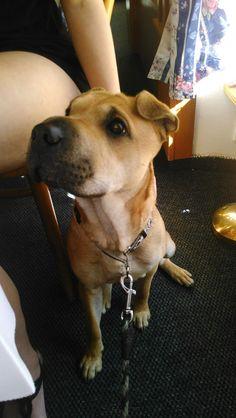 Můj pes Santy