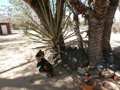 more Yucca Tree