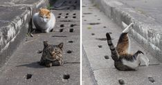 Japanese photographer Nyan Kichi enjoys capturing the beauty of stray cats on the streets. One day he found a gem: there's one particular spot with drain pipe holes that he loves to go. To kick things up, the photographer even got himself a prop to tease them with, and the whole scene got even crazier. It looks just like a whack-a-mole game! But don't whack them at all... Maybe cats don't really need some fancy toys to have fun at all. These stray cats look happy enough, don't...