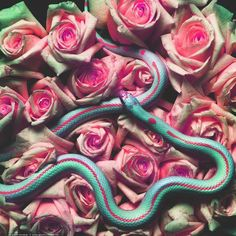 Snake and Roses combined in amazing colors. via http://autumnmarietalk.tumblr.com/post/21148800439