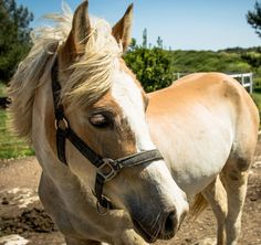 Gaia #horse #country #white #instamood #picoftheday #instadaily #instamood #bestoftheday #animali...