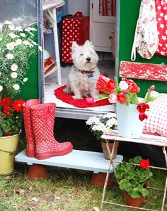 darling dog and red accents