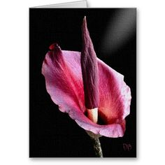 Voodoo Lily Cards