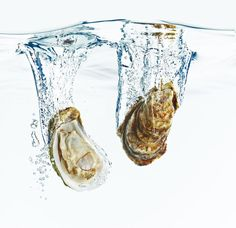 """Crazy facts about oysters that will impress the """"shell"""" out of your friends"""