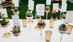 succulent wedding ideas, wedding, table settings, centerpieces, place card Ideas, wedding,