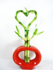 Heart Style Lucky Bamboo Plant with Red Hand-Paint Ceramic Vase.  Price:	$14.99 #luckybamboo
