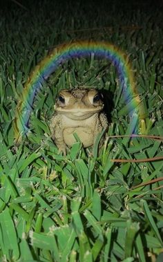 Frog Pictures, Animal Pictures, Cute Little Animals, Cute Funny Animals, Cute Reptiles, Frog Art, Cute Frogs, Frog And Toad, Indie Kids