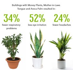 best plants to clean the air