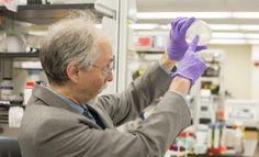 Avance histórico hacia la vida artificial: fabrican un cromosoma sintético en una célula de levadura
