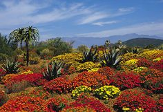 Worcester, Karoo Flowers - South Africa by South African Tourism, via Flickr