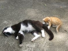 Artie (black & white) and the stray Panthers, Beautiful People, Corgi, Black And White, Cats, Animals, Corgis, Gatos, Animales