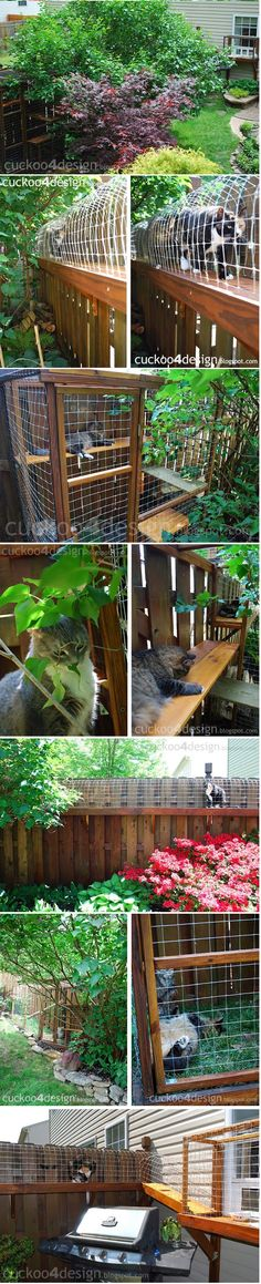 CAT ENCLOSURE. DIY project to keep your cats safe. Definitely an interesting…