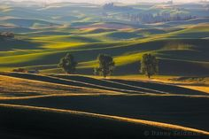 """Lines and Layers - This is a scene I came across one morning while checking out some dirt roads in the Palouse last spring. I was drawn to all the intersecting lines in the foreground and especially the three cottonwood trees that stood out from the rest of the landscape.  Website: <a href=""""http://www.northwestcapture.com/"""">www.northwestcapture.com</a>"""