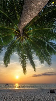 Travel Luggage Cover Suitcase Protector,Holiday Decorations,Hammock Palm Trees Sand Sunny Beach Scenery,,for Travel S