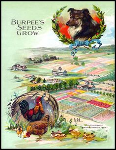 Burpee's Seeds Grow : Wholesale and Resale product opportunities for the gift shop and wall art markets, A premium fine art product at wholesale prices Garden Catalogs, Seed Catalogs, Vintage Labels, Vintage Ads, Vintage Signs, Seed Illustration, Illustrations, Burpee Seeds, Vintage Seed Packets