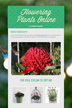 Flowering Plants Online - flowers online by Eva Jamieson Flowering Plants, Planting Flowers, Plants Online, Green Gifts, Flowers Online, Cool Plants, Flower Delivery, Herbs, Herb
