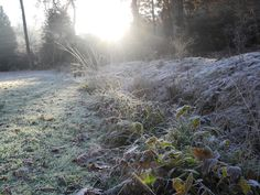 Sun-drenched frost down Rhododendron Ride