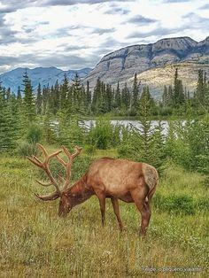 Jasper National Park - 3 atrações pagas que valem a pena