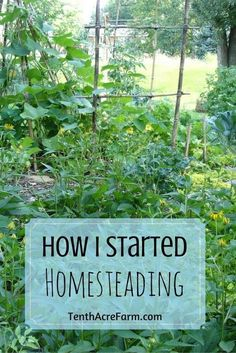One homesteader's journey from unfulfilling employment to a life of empowerment and abundance.