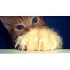Comment gicler votre chatte