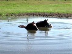 There is a lovely serenity to this video :) HORSES BLOWING BUBBLES IN THE WATER...repinned with thanks by DressageWaiakto.co.nz...