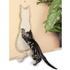 The Cat Gallery have a wide collection of cat scratching posts suitable for all cats. Our quality cat scratch posts are at a great price and available now. Sisal, Indoor Cat Enclosures, Gatos Cat, Cat Towers, Cat Scratching Post, Cat Gifts, Pet Clothes, Pet Shop, Pet Toys