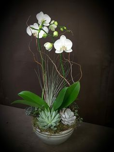 Orchid Flower Arrangements, Modern Floral Arrangements, Orchid Plants, Succulent Arrangements, Flower Vases, Succulents, Garden Bulbs, Japanese Flowers, Plant Art