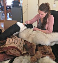 Amidst the Fur for the Animals drive, Born Free USA staff member Claire LaFrance delines donated furs.   Would you like to be part of our Fur for the Animals drive?  Learn how here: http://www.bornfreeusa.org/facts.php?p=4167&more=1  #animals #activism #DIY