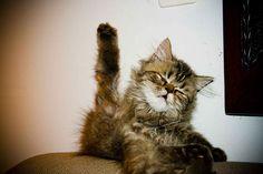 Cat high paw!!