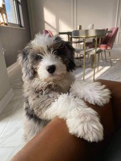 Silly Dogs, Cute Baby Dogs, Cute Baby Animals, Animals And Pets, Bernedoodle Puppy, Goldendoodles, Shiba Inu, Beagle, Cute Dogs And Puppies