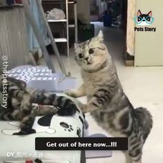 Puppies and kittens Gangster Cats Funny Cute Cats, Funny Vid, Funny Animal Memes, Cute Cats And Kittens, Funny Cat Videos, Cute Funny Animals, Funny Animal Pictures, Animal Jokes, Photo Chat