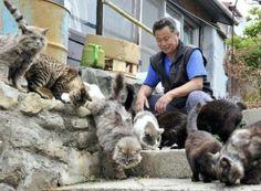 ghadi news - TashiroJima island cats634924655038826250_s