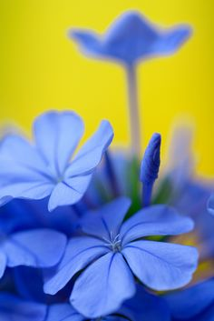 ~~Blue Jasmine by Rosa Maria Fresno Torre~~