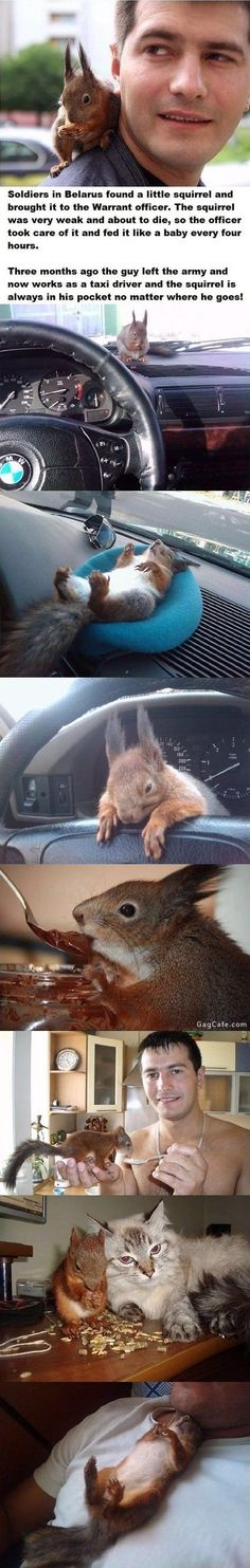 Squirrel best friend cab soldier. Oh my gosh that squirrel is so cute!