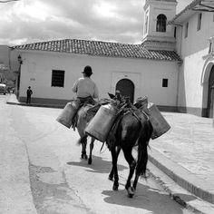 Gente - eventos sociales y tendencias en Cali - El Pais Camel, Animals, Socialism, Countries, Colombia, Black, Historia, Trends, Art