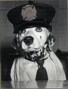Waring the Fire Dog, Rockford Fire Department, 1950